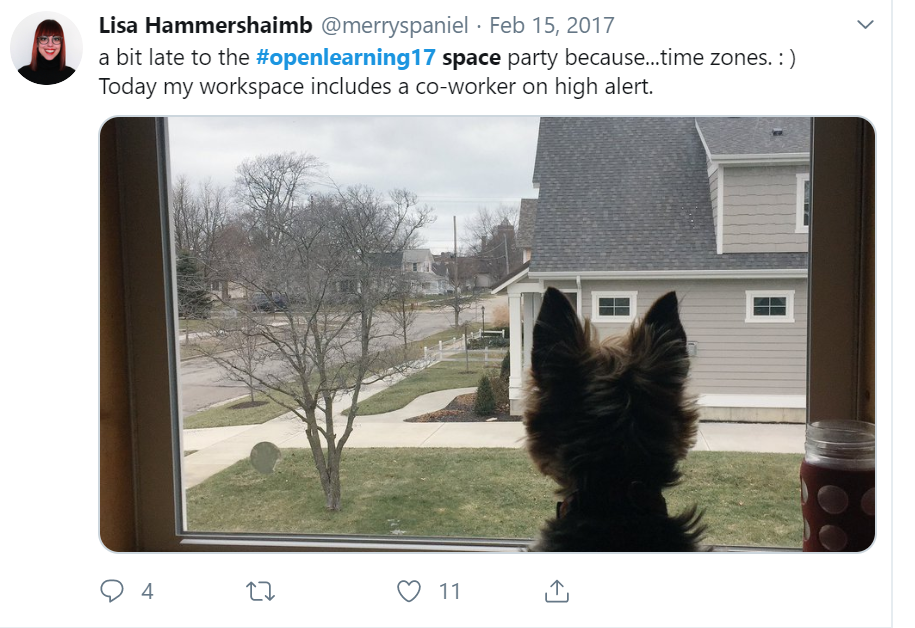 "Small dog looking out a home window into the neighbor's front yard. Caption Reads: ""a bit late to the #openlearning17 space party because...time zones. :) Today my workspace includes a co-worker on high alert."" (Hammershaimb, 2017)"